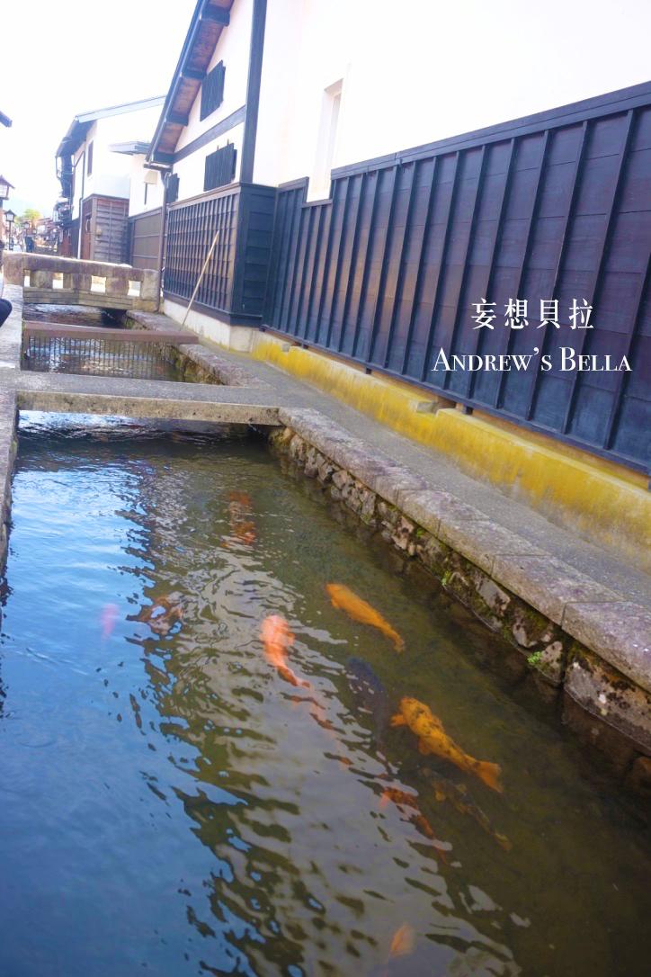 你的名字 飛驒古川站 瀨戶川鯉魚