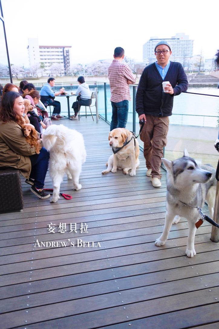 富山旅遊 賞櫻景點推薦 星巴克狗狗聚會