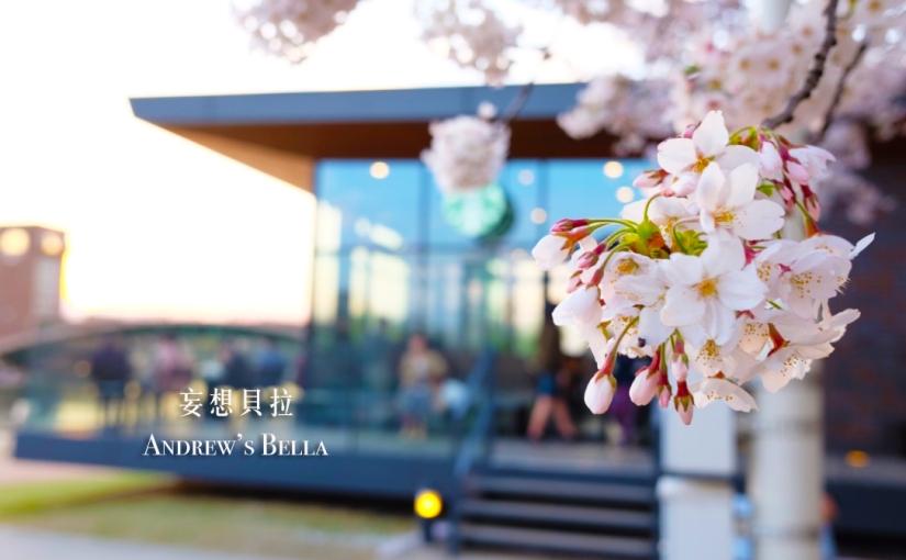 【富山旅遊】賞櫻景點推薦 – 全世界最美的星巴克