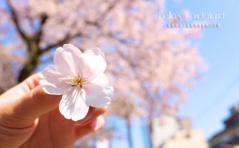 【日本 金澤景點】必去的五大賞櫻景點,快速瞭解金澤櫻花季怎麼玩!