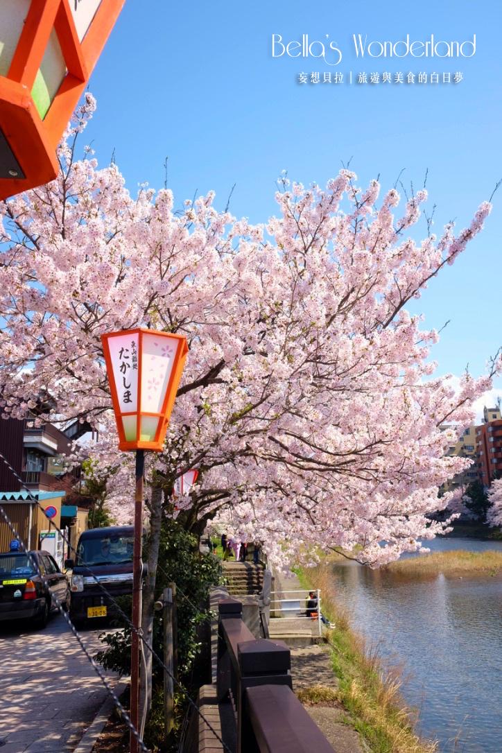 日本賞櫻 - 金澤主計町櫻花