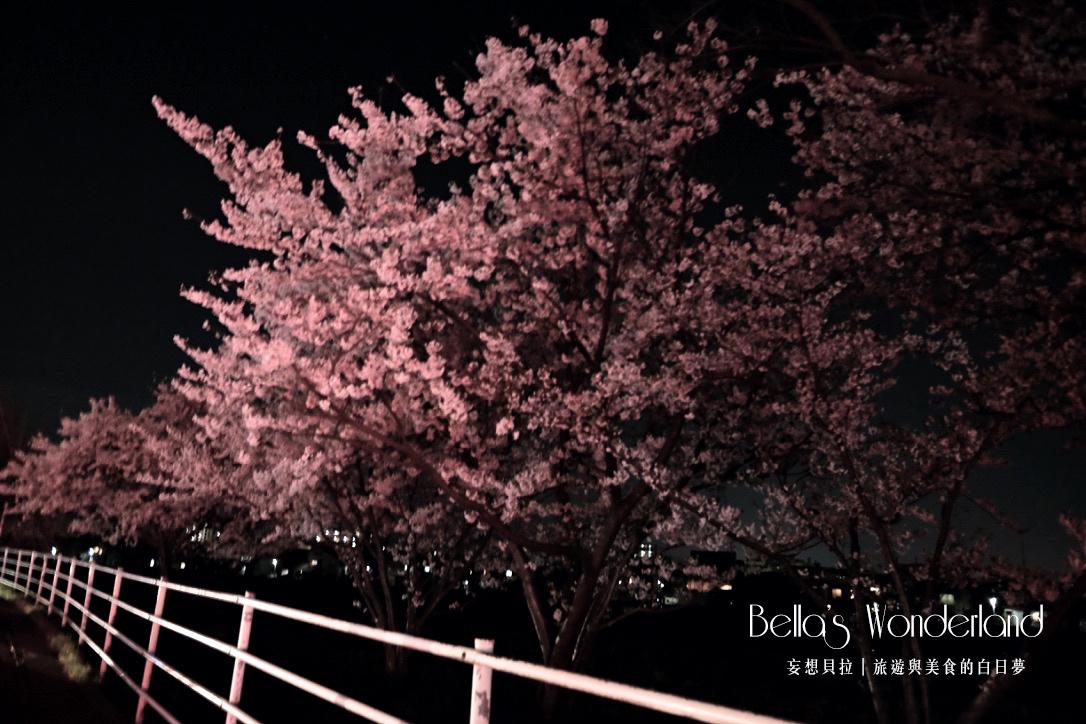 日本賞櫻 - 金澤犀川