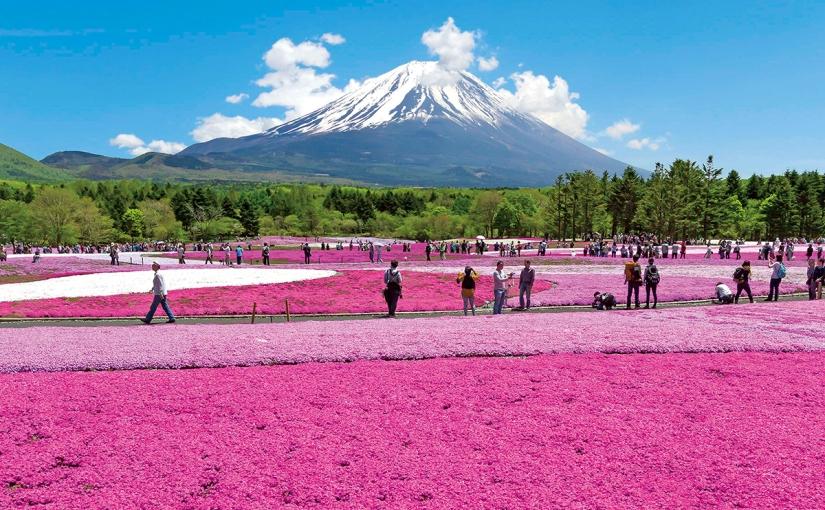 【河口湖景點】富士芝櫻祭交通門票攻略 現場再買票就好了!東京近郊一日遊(上)
