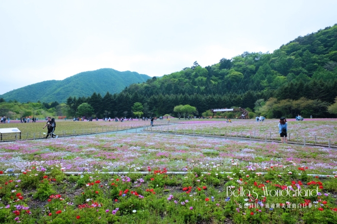 河口湖景點 芝櫻祭會場限定必買伴手禮 各色櫻花