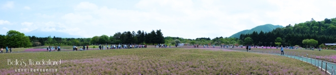 河口湖景點 芝櫻祭會場限定必買伴手禮 園區全景
