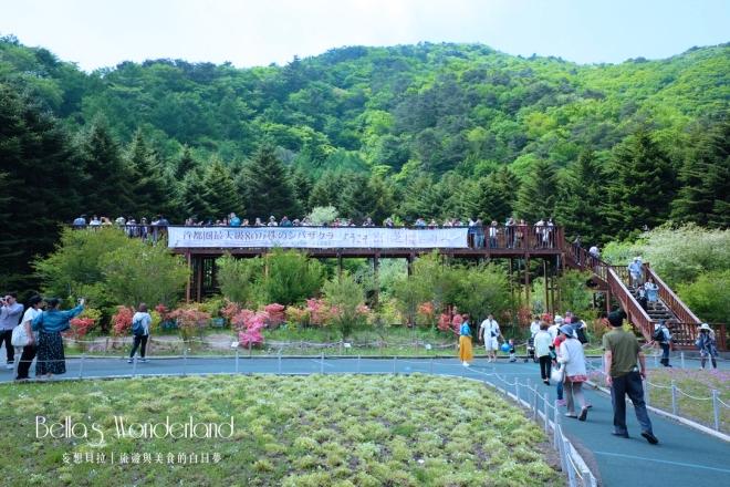 河口湖景點 芝櫻祭會場限定必買伴手禮 瞭望台
